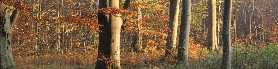 http://www.gjerrild.net/uploads/images/Topbilleder/SLK1.jpg